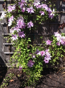 Red Barn Retreat Vacation Rental Clematis